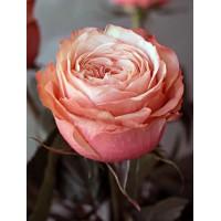 Роза Кахала