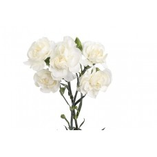 Гвоздика белая кустовая